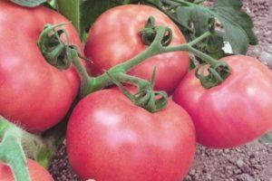 Характеристика и описание сорта томата Бренди розовый