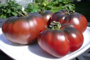 Характеристика и описание томата Негритенок, агротехника выращивания сорта