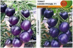 Характеристика и описание сорта томата Синяя гроздь