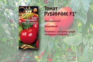 Характеристика и описание томата Рубинчик F1, рекомендации огородников