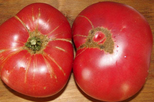 Крупные помидлоры