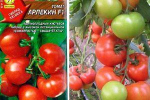 Описание томата Арлекин f1 и его характеристики