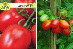 Описание и характеристика сорта томата Авизо f1