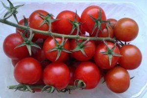 Супердетерминантные сорта помидор для открытого грунта и теплиц