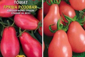Описание, характеристики томата Груша розовая, особенности сорта