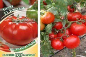 Описание гибридного томата Касатик: достоинства и недостатки
