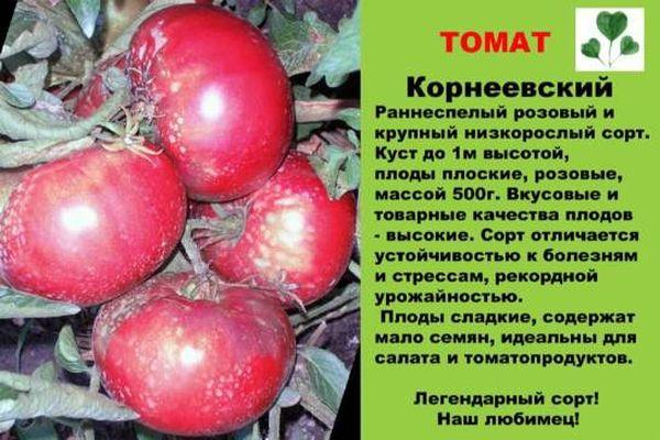 Описание томата