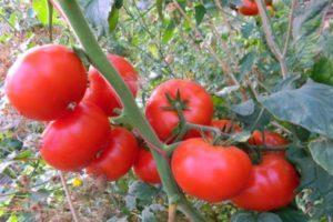 Описание томата Корнеевский, его характеристики и правила выращивания