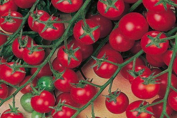 Маленькие помидоры