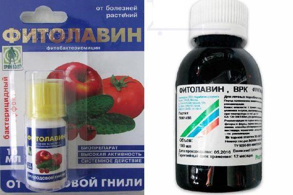 лекарство Фитолавин