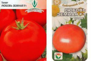 Описание и правила выращивания сорта томата Любовь земная F1