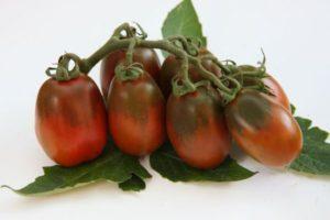 Высокоурожайный томат Шоколадный зайчик: описание сорта