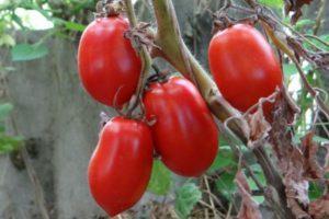 Описание и характеристика сорта томата Сосулька красная