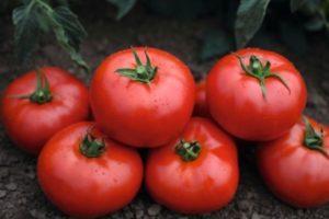 Описание томата Тонопа f1, правила выращивания