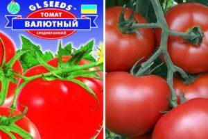 Описание сорта томата Валютный и его характеристика