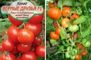 Урожайность кистевого томата Верные друзья и отзывы о сорте
