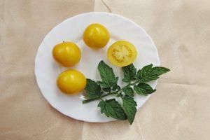 Описание и общая характеристика желтоплодного томата Янтарный 530