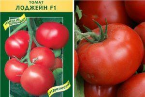 Характеристика томата сорта Лоджейн и правила выращивания