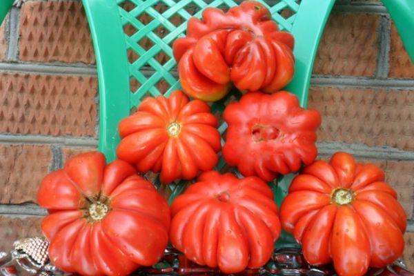 Ребристые помидоры