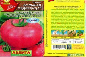 Описание гигантского томата Большая медведица и агротехника выращивания