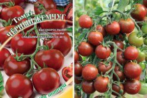 Описание томата Черный жемчуг и особенности выращивания