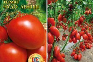 Описание томата Чудо лентяя и выращивание рассады