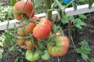 Характеристика и описание томата сорта Чудо сада, выращивание и уход