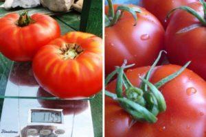 Описание селекционного томата Делишес, выращивание и правила посадки