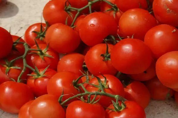 Ветки с помидорами