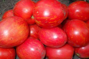 Описание томата Дон Жуан, его характеристика и особенности выращивания