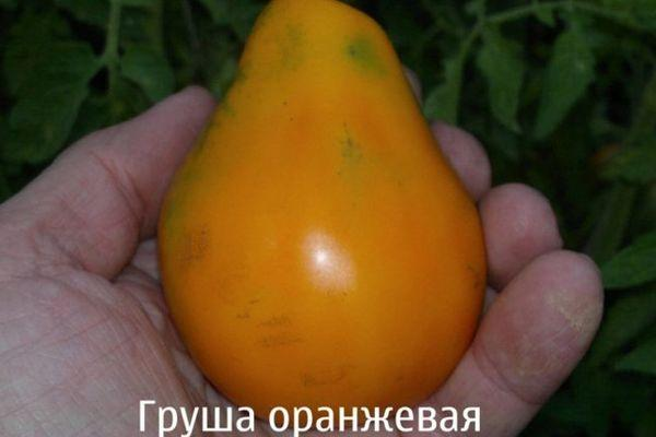 Грушевидный помидор