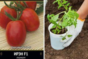 Описание томата Ирэн, культивирование и выращивание сорта
