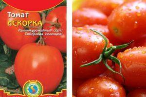 Описание томата Искорка, правила выращивания рассады и урожайность