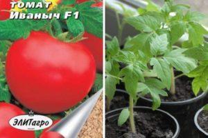 Описание томата Иваныч f1 и рекомендации по выращиванию