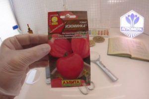 Краткая характеристика и описание сорта томата Изюминка