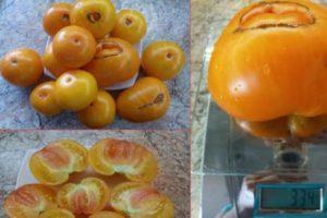 Описание томата Казахстанский желтый и агротехника культивирования