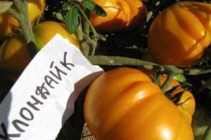 Описание томата Клондайк и особенности выращивания