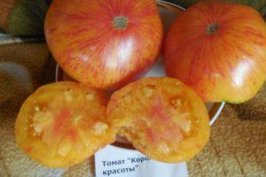 Описание томата Король красоты, выращивание и правила посадки
