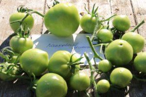 Описание томата Ласковый Миша и правила выращивания низкорослого сорта