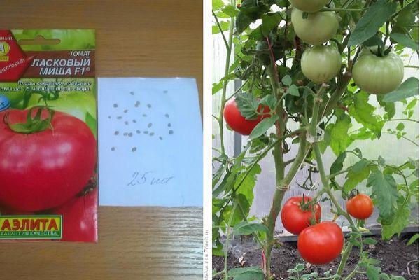 Выращенные томаты
