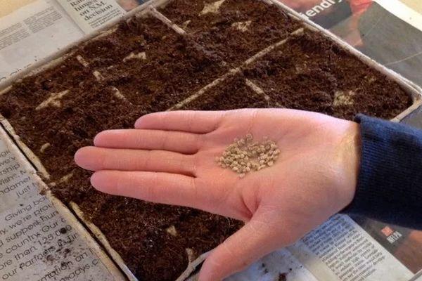 Семена на ладони