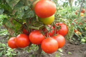 Краткое описание томата Летний сад F1 и отзывы огородников