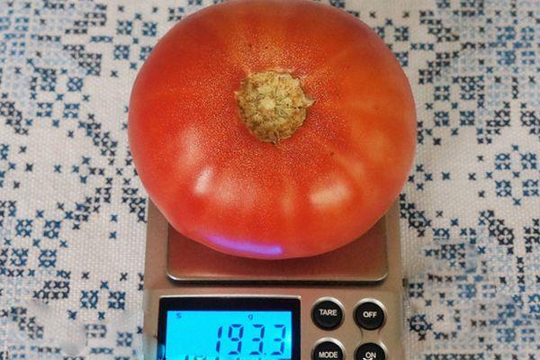 Взвешивание помидора