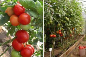 Описание и характеристика томата Марисса, правила выращивания