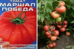 Описание томата Маршал Победа, преимущества и правила выращивания