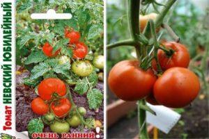 Описание детерминантного сорта томата Невский юбилейный, преимущества и недостатки