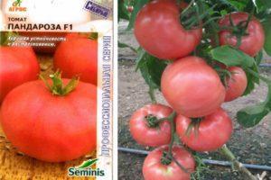 Описание томата Пандароза и агротехника культирования гибрида