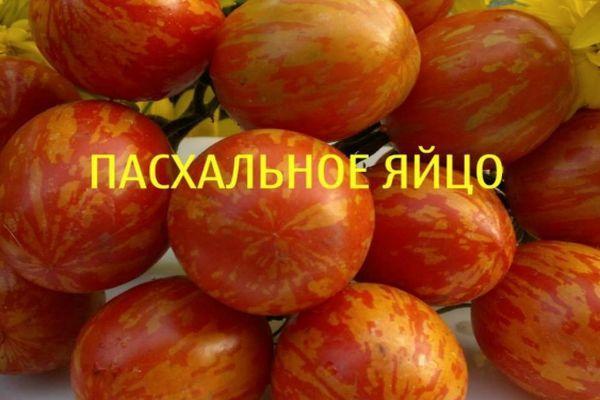 Рыжие помидоры