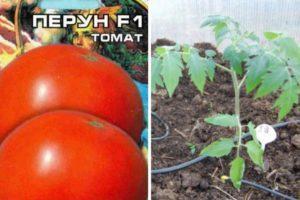 Описание томата Перун и агротехника культивирования сорта