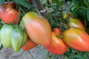 Описание томата Подсинское чудо и советы по выращиванию